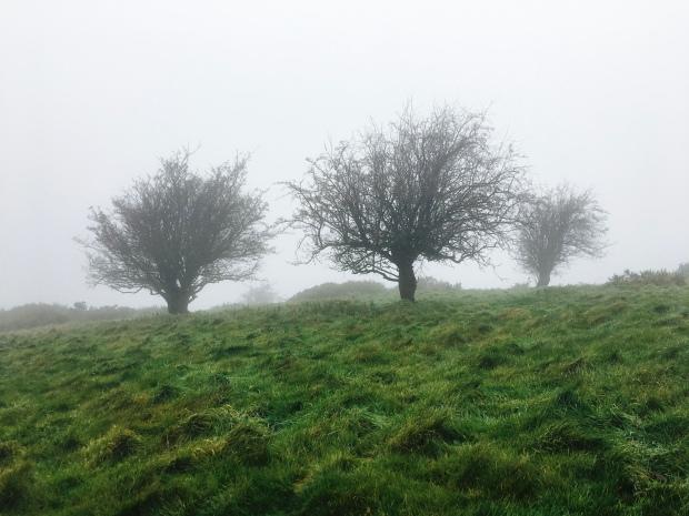 Misty winter trees