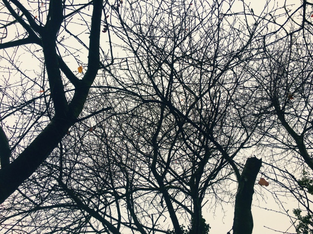 A few autumn leaves cling onto a mostly bare tree