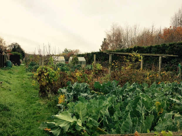 An allotment garden