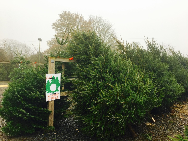 Leigh Sinton Christmas tree farm