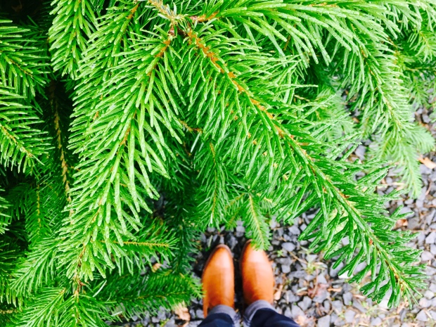 Pine tree and tan leather boots