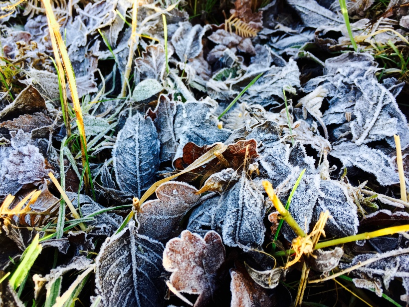 Frozen leaves on grass.