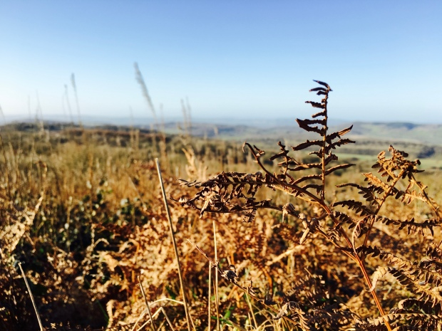 Frost burnt ferns and long grass on top of the Malvern Hills.