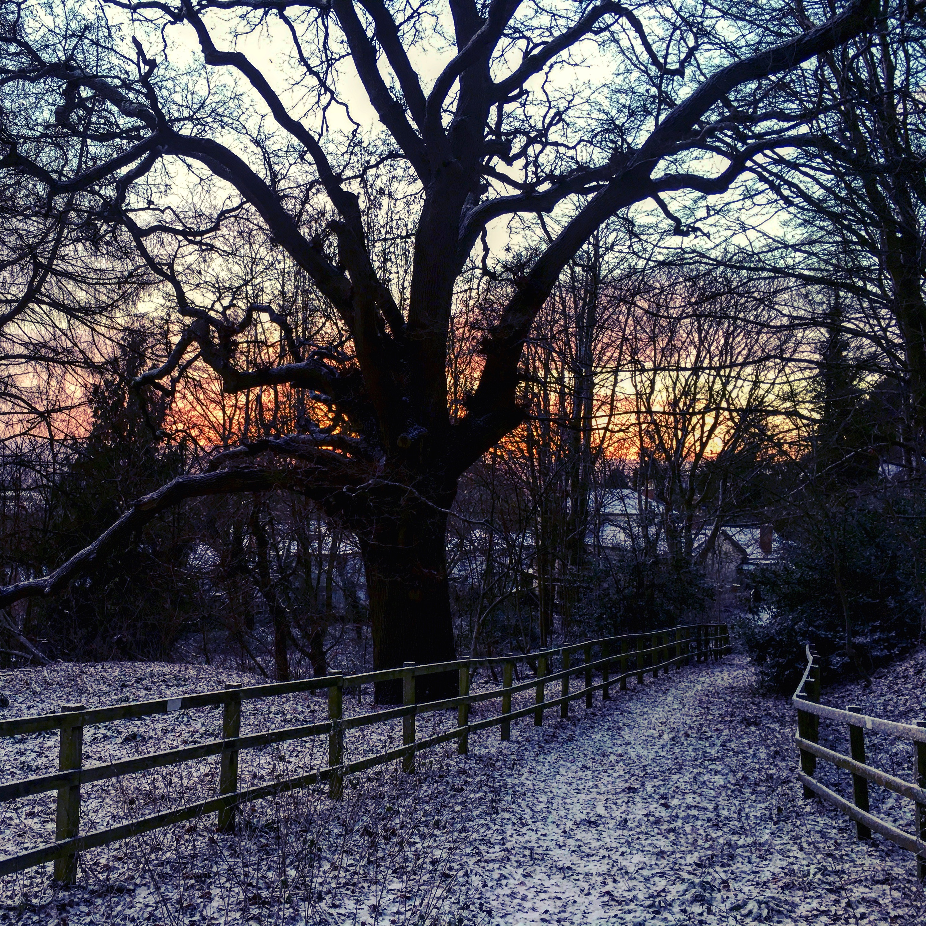 A snowy path in a park with a pink and orange sunrise silhouetting a large tree.