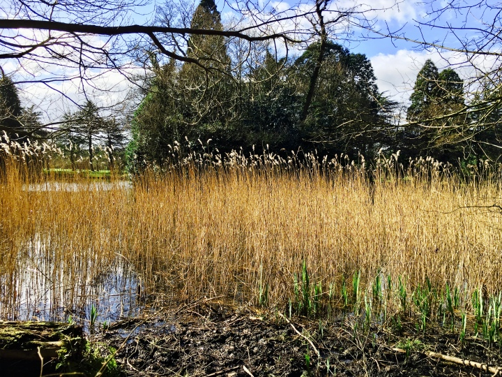 The lake in the grounds of National Trust property, Tredegar House, in Wales.