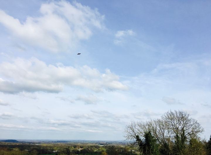 Bird flying across bright blue sky.