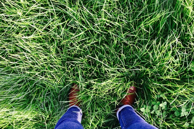 Feet standing in a paddock of lush grass.
