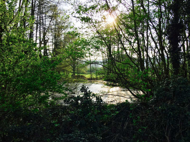 A sunlight pond surrounded by green trees near Malvern, Worcestershire.
