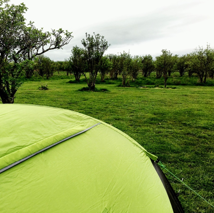 Tent set up in the Elderflower Orchard at Thistledown Farm, Nympsfield Gloucestershire.