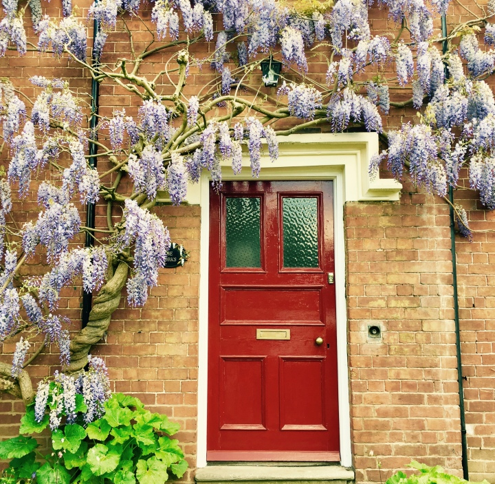 Flowering wisteria surrounding the front door of a house in Ombersley, Worcestershire.
