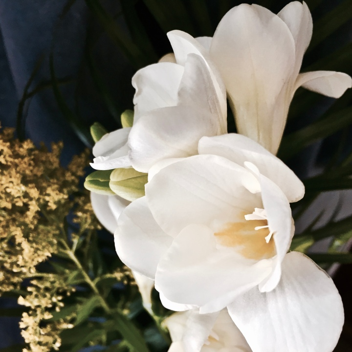 Freesia flowers in a vase.