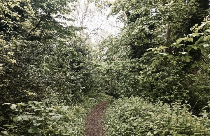 Woodland on the Malvern Hills, Worcestershire, England.