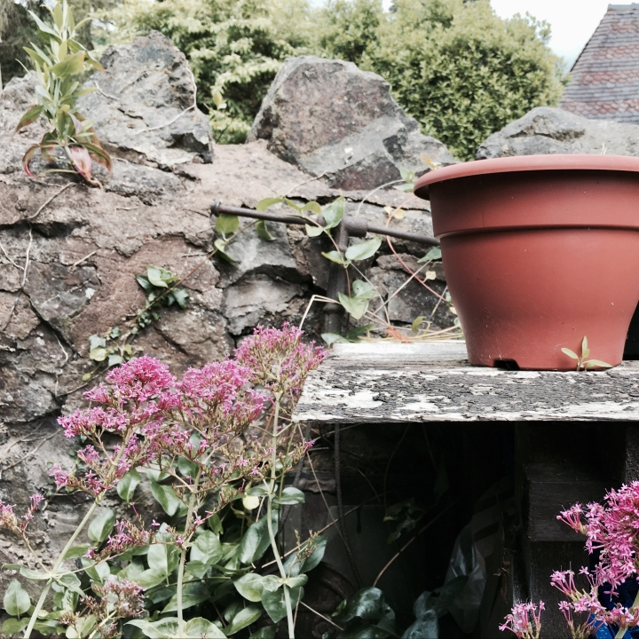 Flowers surrounding a potting table in an English garden.