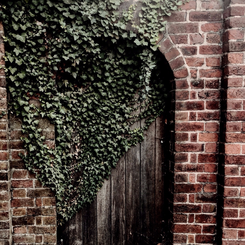 Ivy growing across a wooden door in Worcester, England.