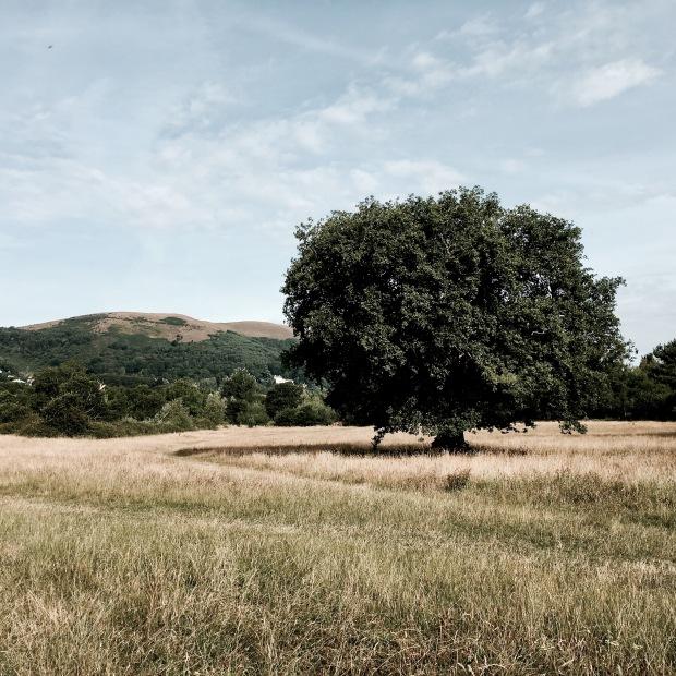 St Wulstan's Nature Reserve, Malvern Wells, Worcestershire, England.