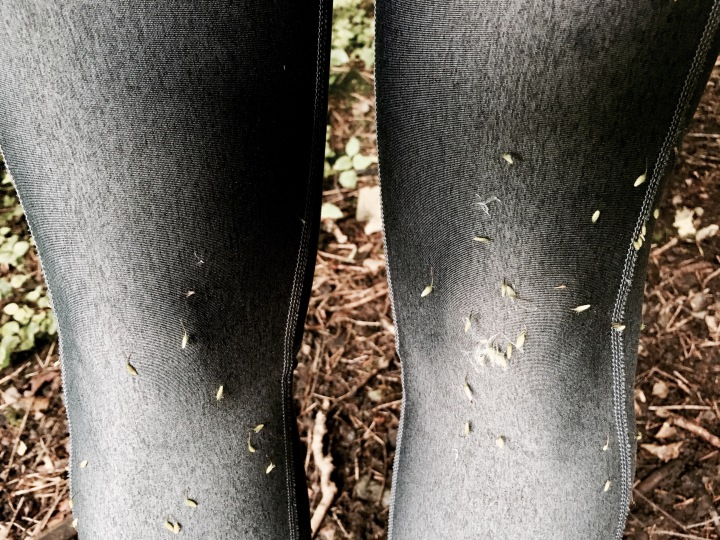 Athletic leggings covered in grass seeds.