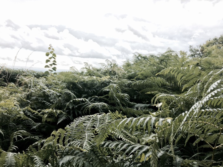 Malvern Common, Worcestershire England.
