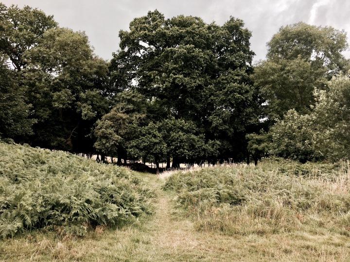 Malvern Common, Worcestershire England.