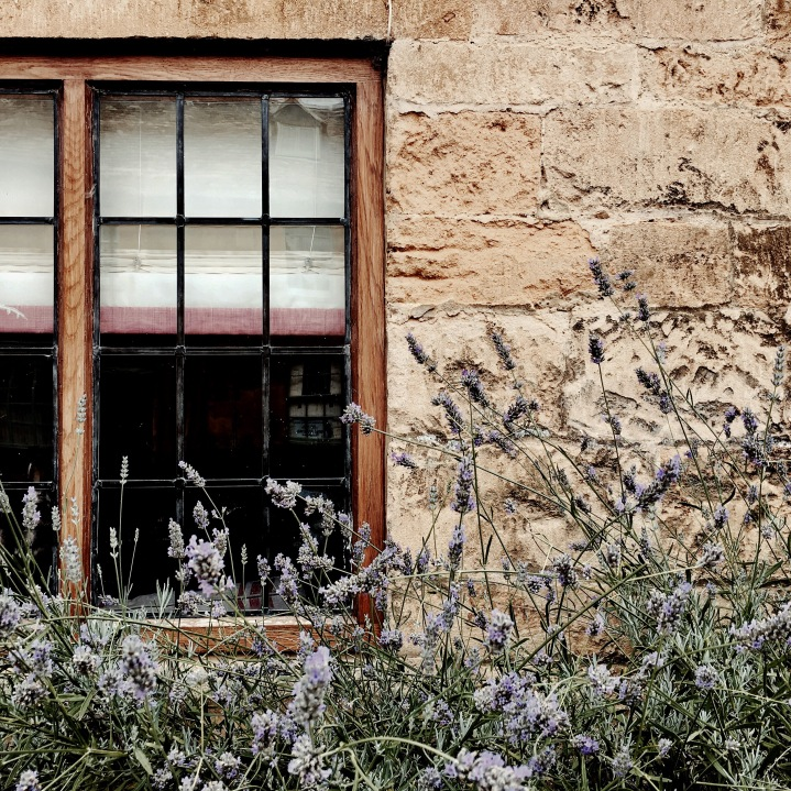 Lavender growing in front of a Cotswold stone cottage in the village of Broadway, Worcestershire.