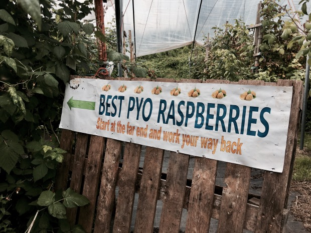 Pick your own raspberries sign at a fruit farm in Worcestershire, England.