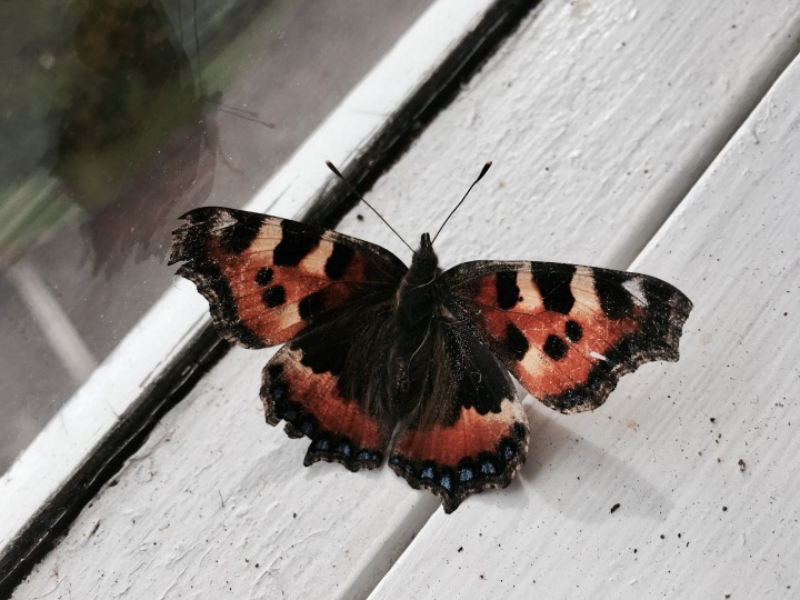 A 'Painted Lady' butterfly on a window sill.