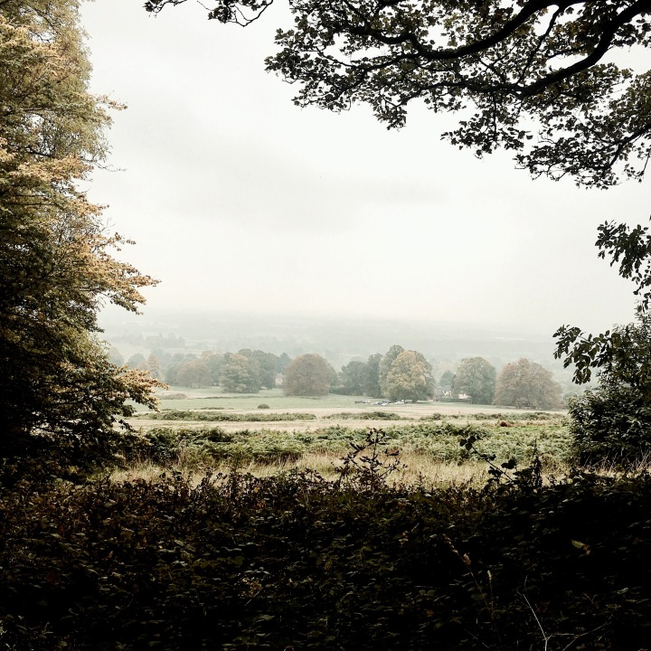 The misty Malvern Common in Worcestershire, England on an autumn's day.