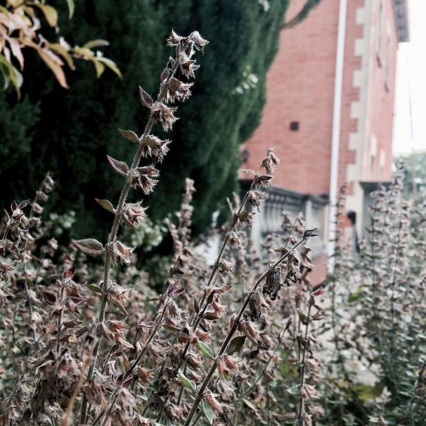 Fading stems in an English cottage garden.