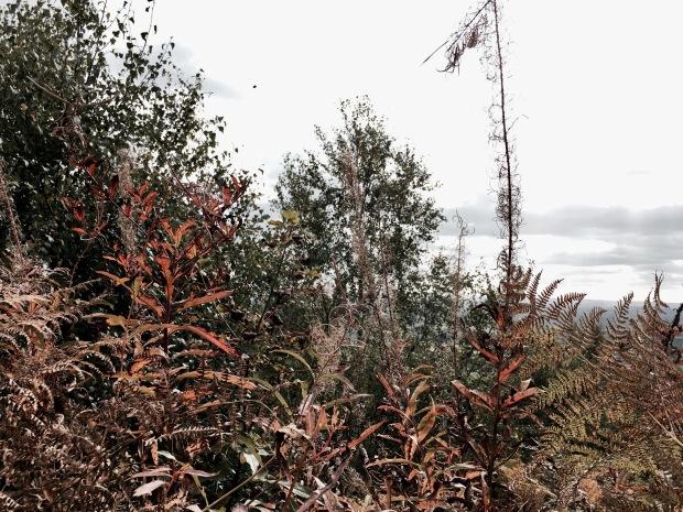 Autumnal undergrowth on the Malvern Hills in Worcestershire, England.