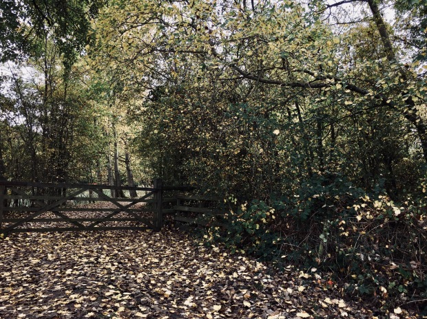 Woodland at Croome Park, Worcestershire, England.