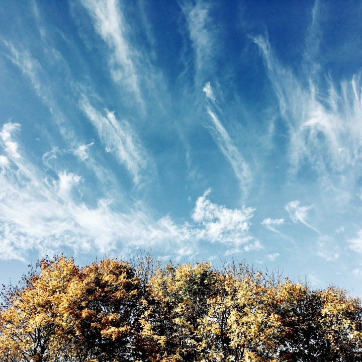 Golden leaves on tree tops set against a blue sky with wispy clouds.