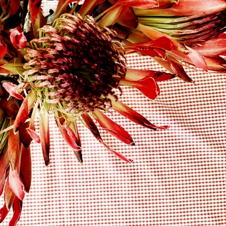 Looking down on a protea flower, sitting in a vase on a checked table cloth.