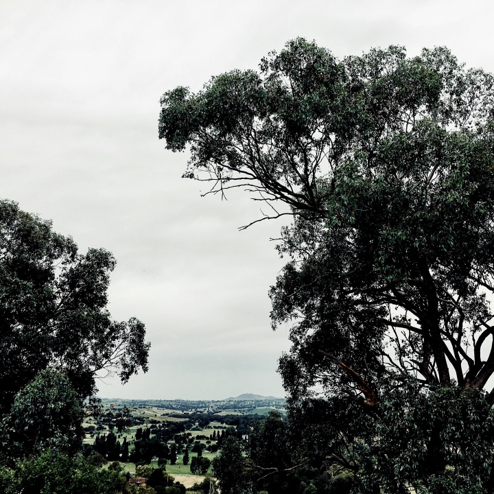 Gum trees and rolling green farmland around Jugiong, NSW, Australia.