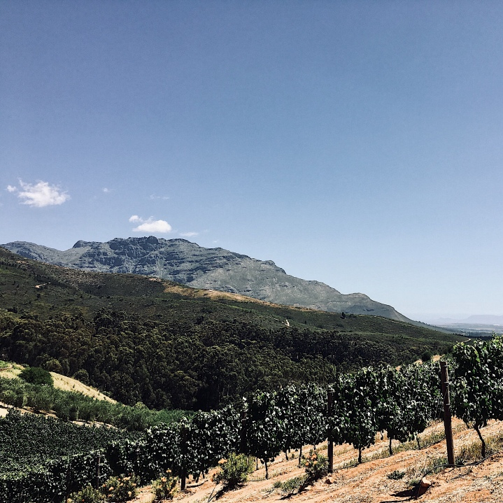 Tokara wine and olive estate, Stellenbosch, Western Cape, South Africa.