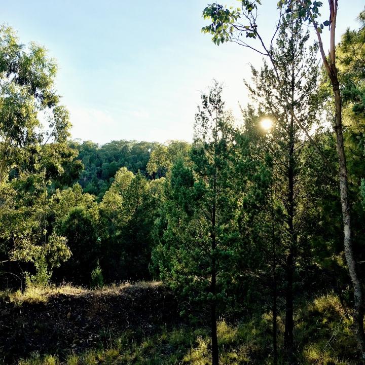 Willans Hill Reserve, Wagga Wagga, NSW, Australia.