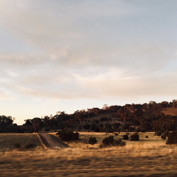 Australian bushland at sunset from the window of a car.