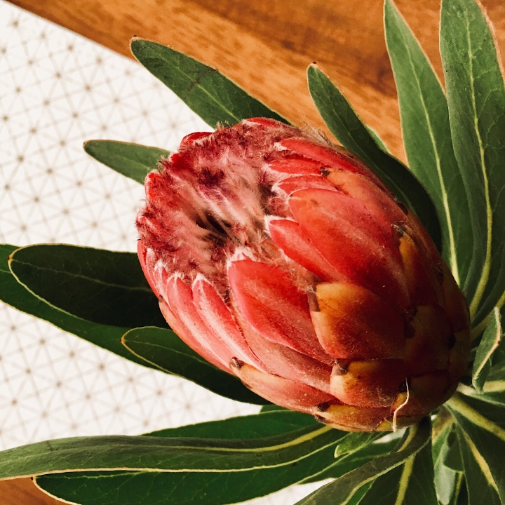 Protea flower in a vase .