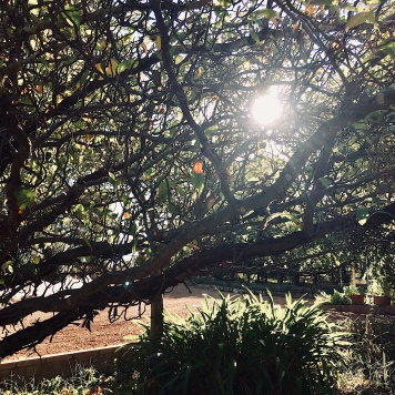 Sun from behind a tree in a sprawling Australian country garden.
