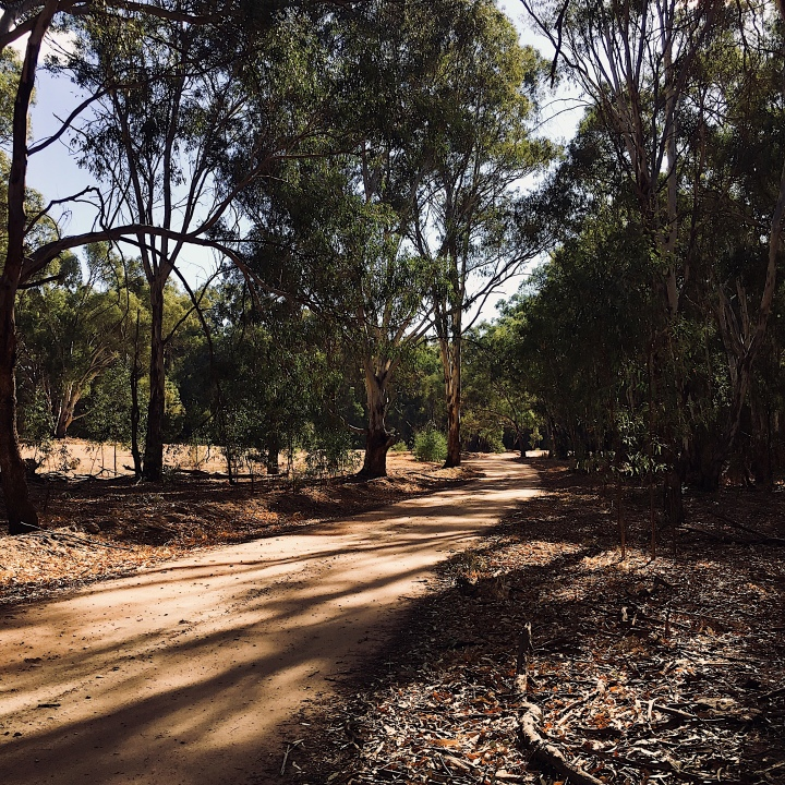 Dirt road through the Narrandera koala reserve, New South Wales, Australia.