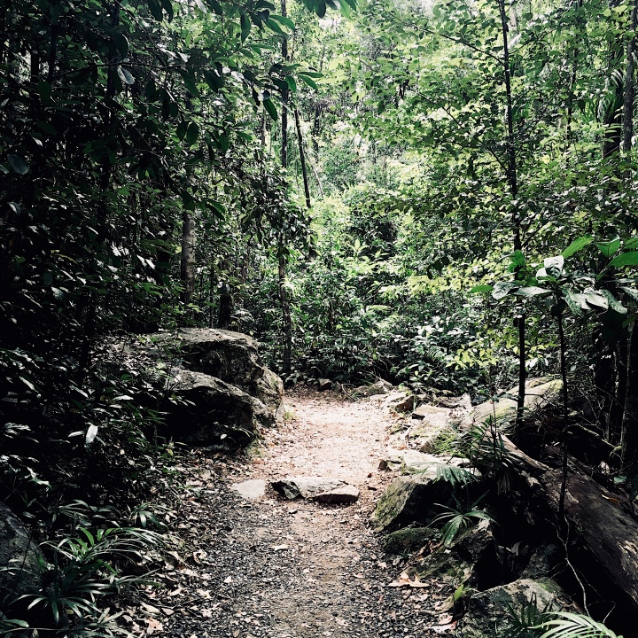 Walking track, Finch Hatton Gorge, Eungella National Park, Queensland, Australia.
