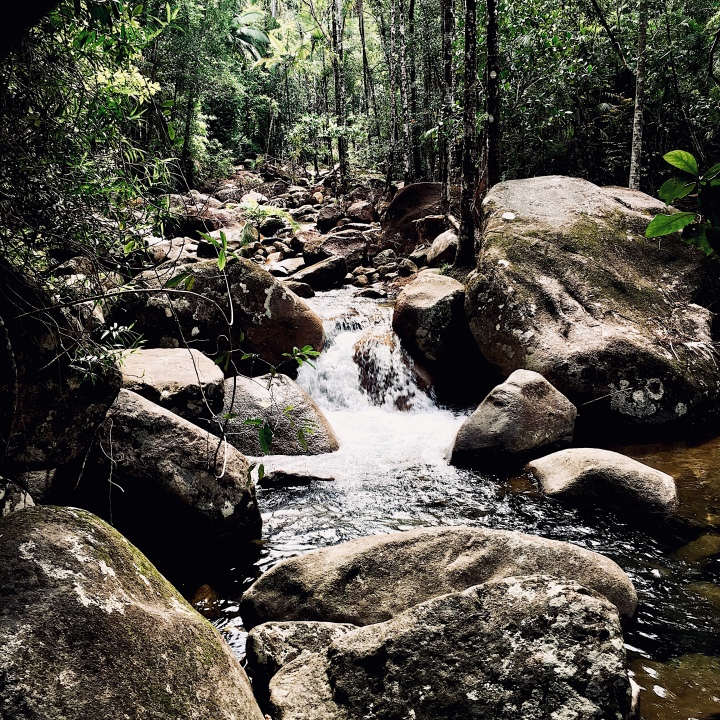 Rawson's Creek, Finch Hatton Gorge, Eungella National Park, Queensland, Australia.
