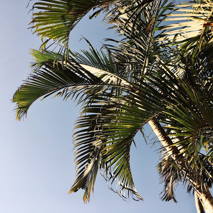 Palm fronds and blue sky.