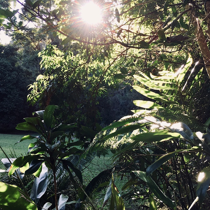 Afternoon light peeking through tropical foliage.
