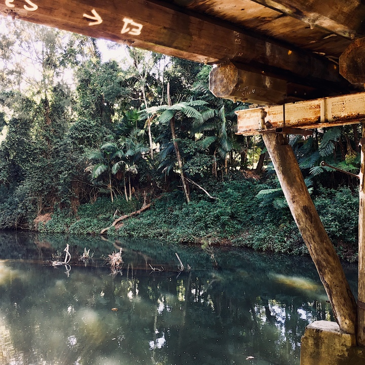 Underneath the Broken River bridge, Eungella National Park, Queensland, Australia.