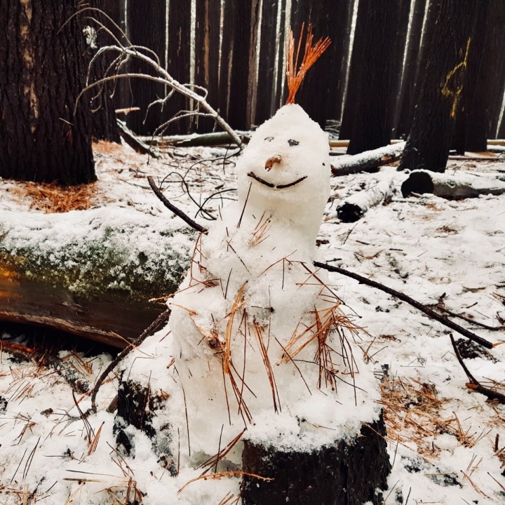 A snowman in the Sugar Pine Walk, Laurel Hill, New South Wales, Australia.