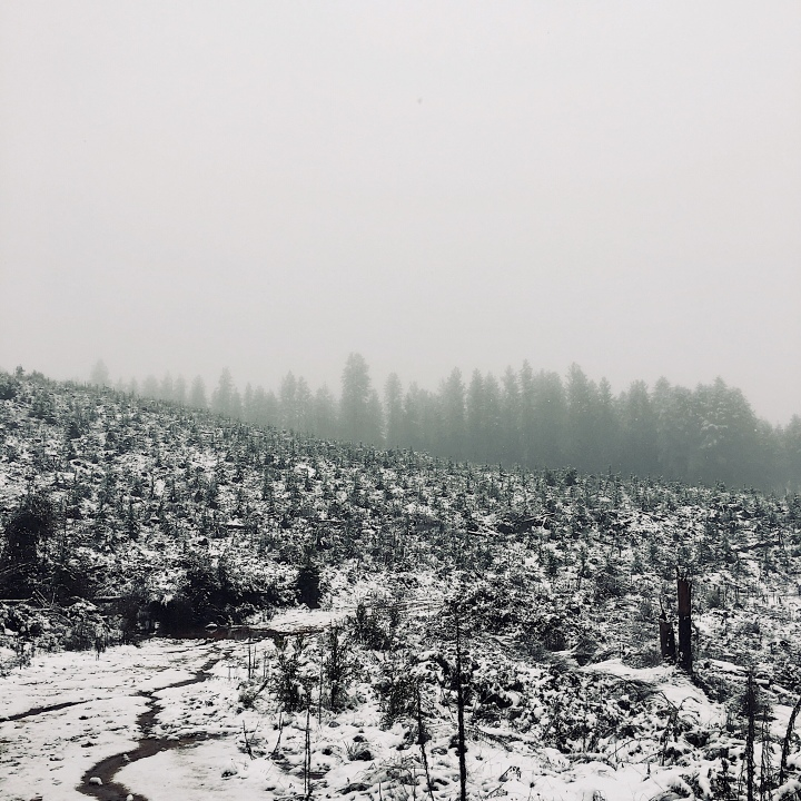 A snowy Bago State Forest at Laurel Hill, New South Wales, Australia.