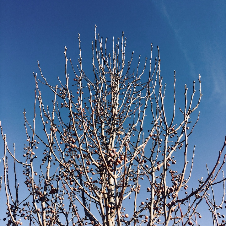 A bare tree and blue skies.