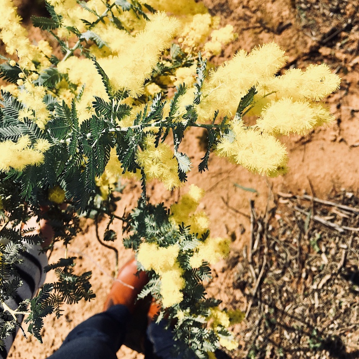 Woman holding bunch of wattle.