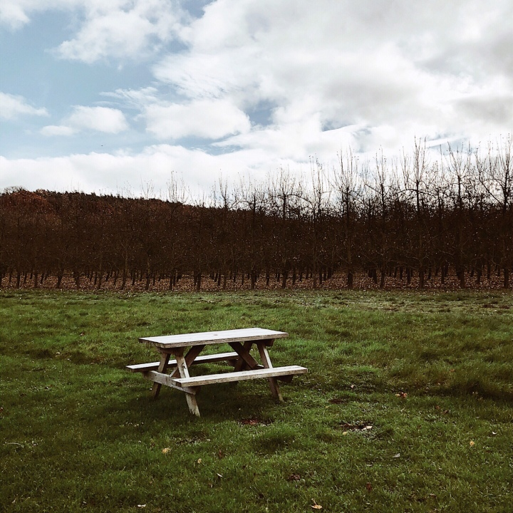 Picnic table near a bare orchard in Worcestershire, England.