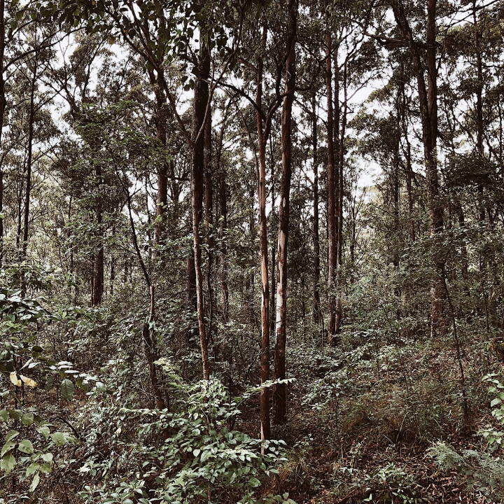 Forest on the D'Aguilar Range near Brisbane, Queensland, Australia.