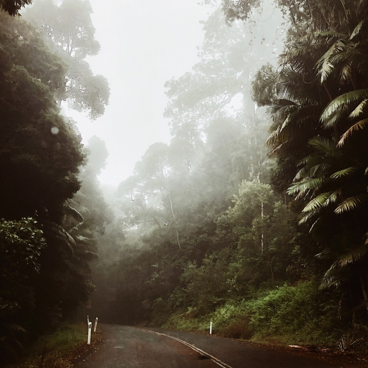 The road to Mt Glorious, Queensland, Australia.